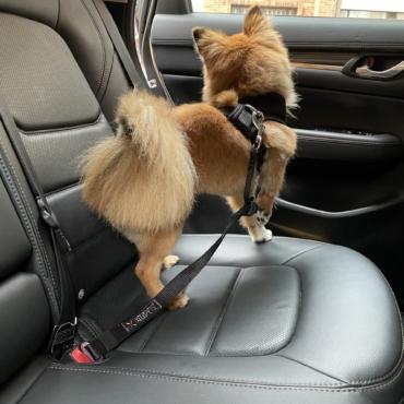 XOLOPets Cinturon de Seguridad para el Carro
