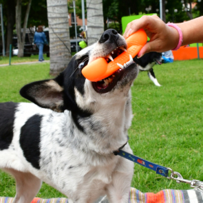 Juguete-Perro-Phone-Tipo-Hueso-Xolo-Pets