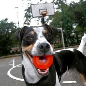 Yo-Yo Juguete Para Perros XOLOPets