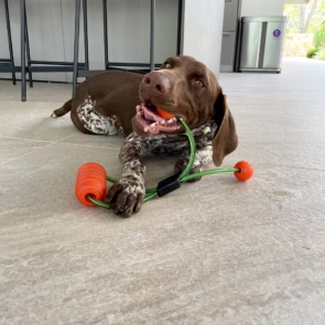 Juguete-Perro-Interactivo-Impermeable-Poliuretano-Xolo-Pets