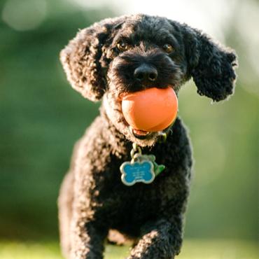 Juguetes Para Perros West Paw Jive Naranja con Perro