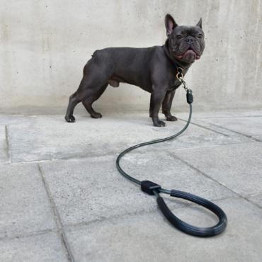 Bull Dog Frances Correa Larga Negro XOLOPets